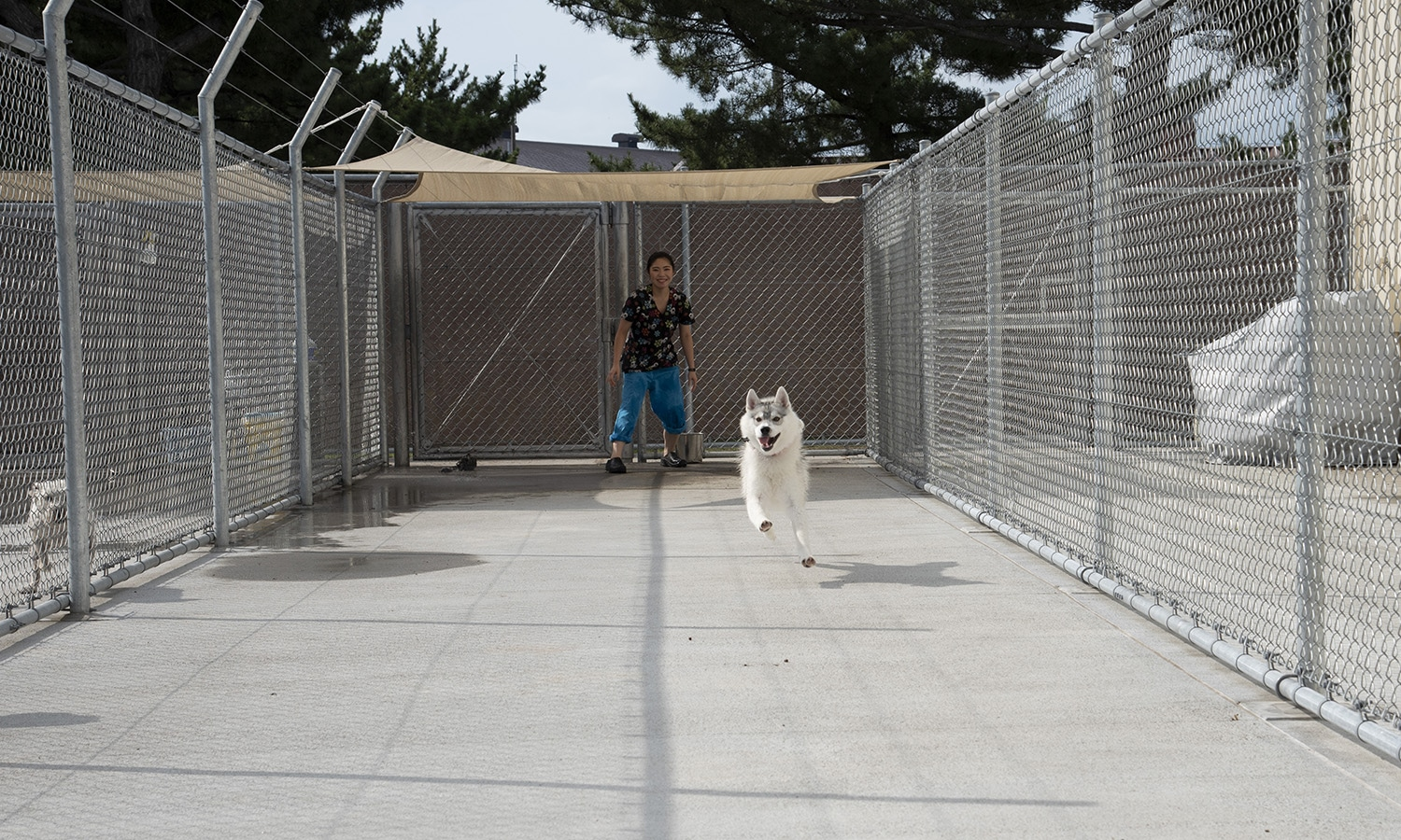 Pups love to run and play at the Misawa Pet Kennel